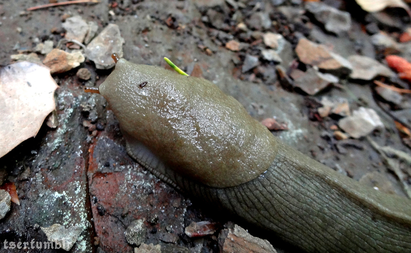 Slugs (and Snails) as Pets