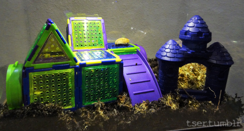 An image of a critter keeper style enclosure, with colorful plastic houses. A slug is perched on one.